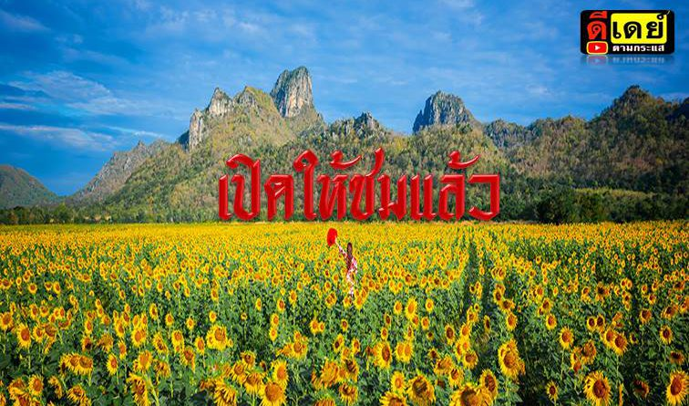 ทุ่งทานตะวันลพบุรี