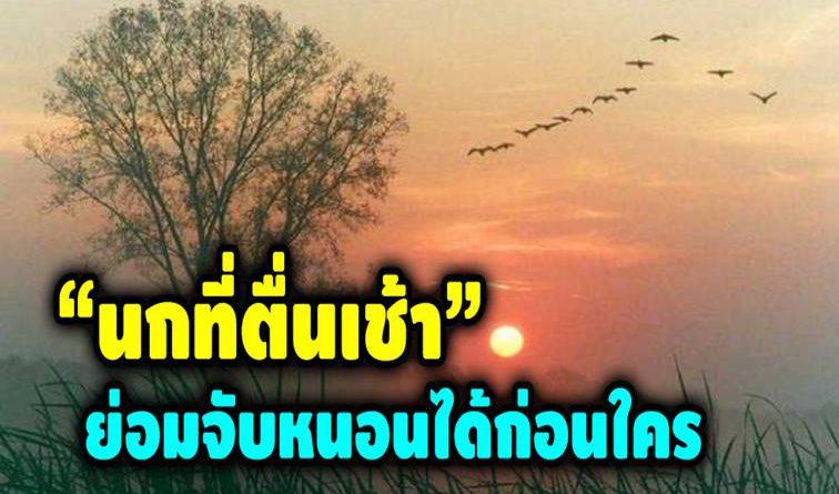 นก ที่ตื่นเช้า ย่อมจับหนอน ได้ก่อนใคร