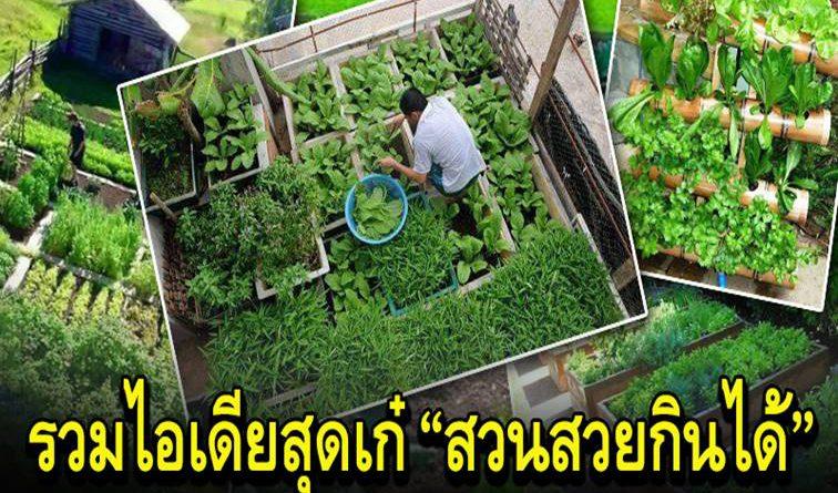 ไอเดีย การทำแปลงผักสวนครัว สวยงาม ตามวิถีเกษตรพอเพียง