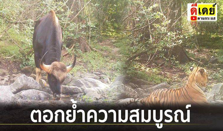 เปิดภาพ! สัตว์ป่าหายาก