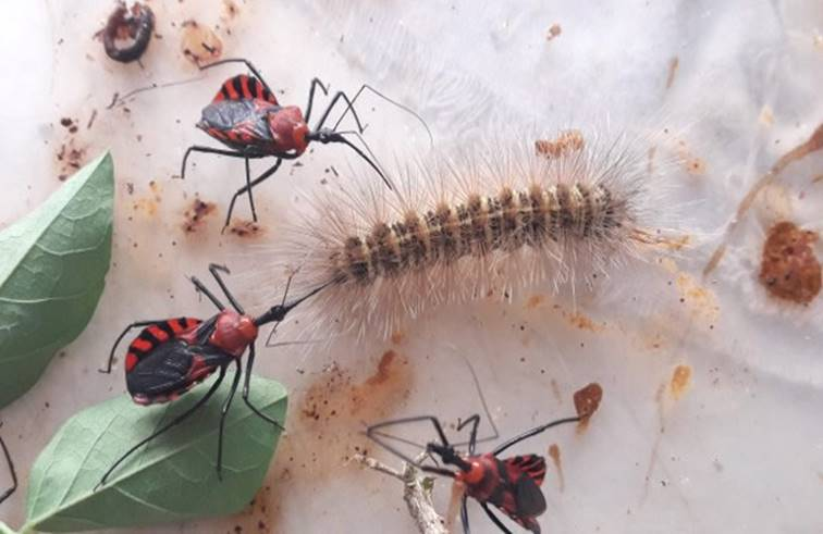 6 แมลงอันตรายที่ต้องระวัง