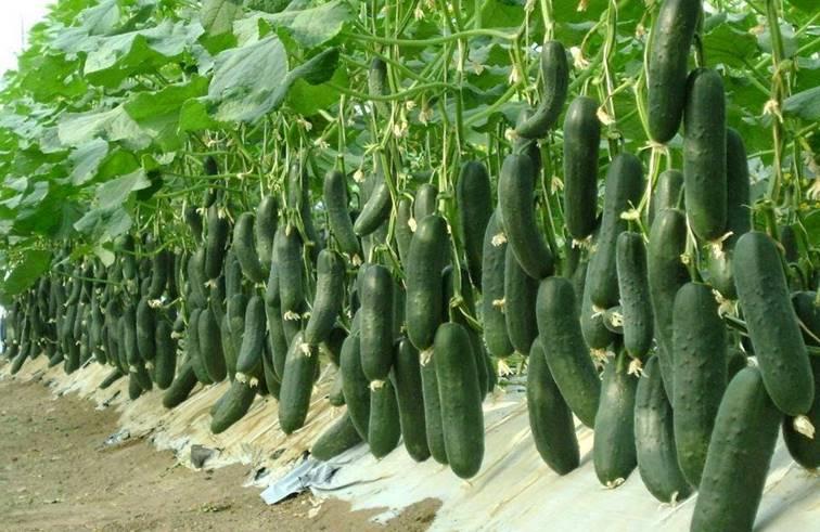 สอนเพาะเมล็ดผักสวนครัว 10 ชนิด ปลูกง่ายและโตเร็วมาก