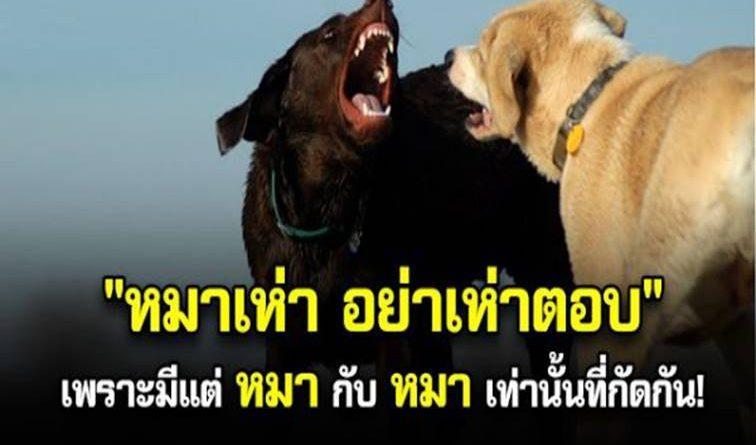 """หมาเห่า อย่าเห่าตอบ เพราะมีแต่ """"หมา""""กับ """"หมา""""เท่านั้น ที่กัดกัน"""
