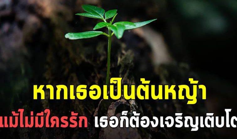 """หากเธอเป็นต้นหญ้า """"แม้ไม่มีใครรัก เธอก็ต้องเจริญเติบโต"""""""