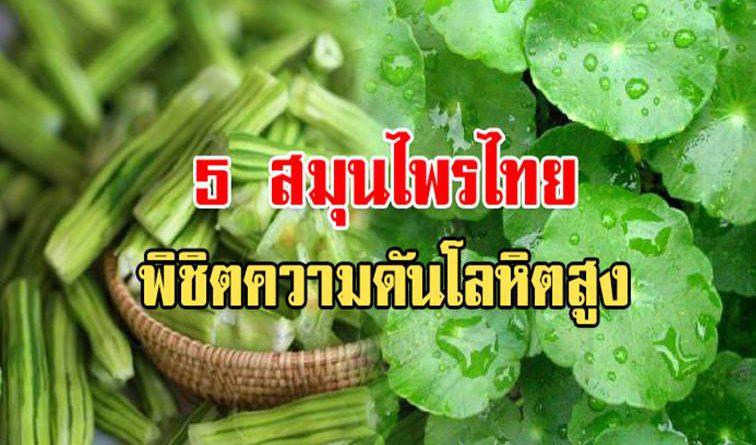 พืชมหัศจรรย์! 5 สมุนไพรไทย พิชิตความดันโลหิตสูง สาเหตุของโรคอัมพฤกษ์ อัมพาต โรคหัวใจ