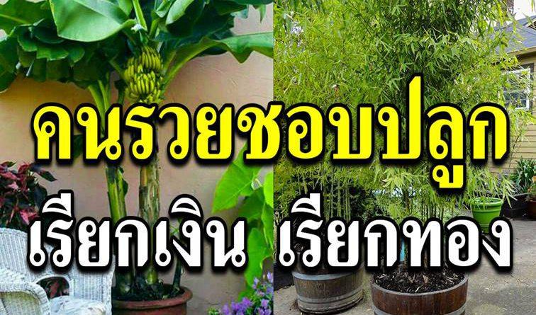 คนรวยชอบปลูก 10ต้นไม้มงคล เรียกเงินเรียกความสุขให้กับชีวิต