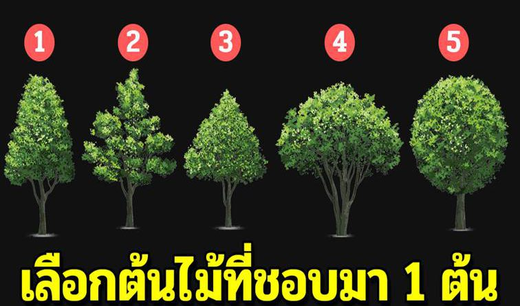 เลือกต้นไม้ 1 ต้น บ่งบอกถึงนิสัยลึกๆ ในใจได้