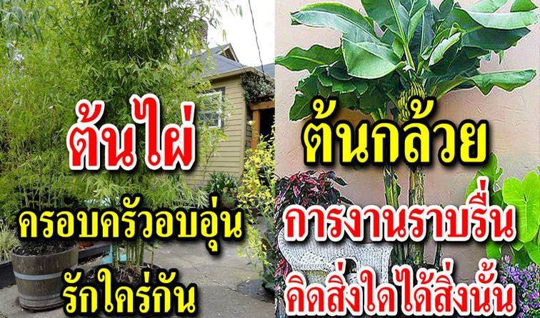 ต้นไม้มงคล ปลูกไว้รอบบ้าน เสริมการงาน ความสุขในชีวิต