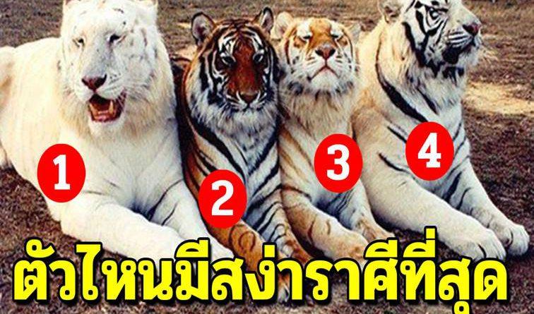 เลือกเสือตัวที่มีสง่าราศีที่สุด จะบ่งบอกว่าโชคคุณจะเข้าตอนไหน