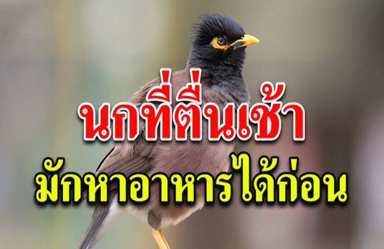 จงเป็นนกที่ตื่นเช้า ที่หาอาหารก่อนใครๆ (เขียนไว้ดีมากๆ)