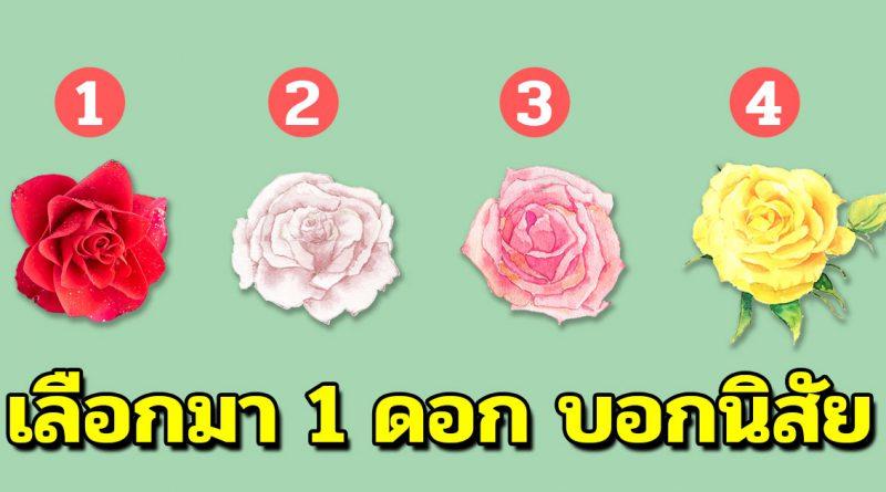 ดอกกุหลาบทายนิสัย คุณชอบดอกไหนรู้หมดเปลือก