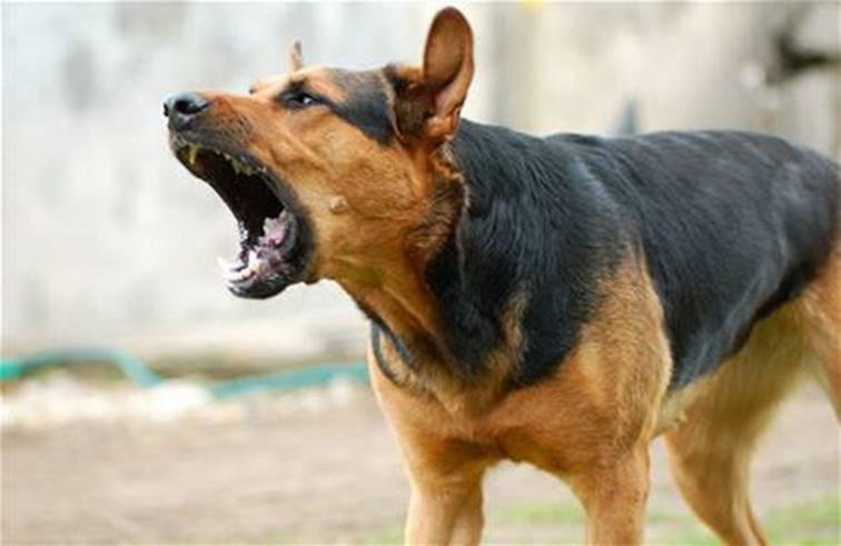 ถ้าเรามัวแต่ปาก้อนหินใส่หมาทุกตัวที่เห่า แล้วเมื่อไหร่เราจะเดินไปถึงยอดเขาละ?